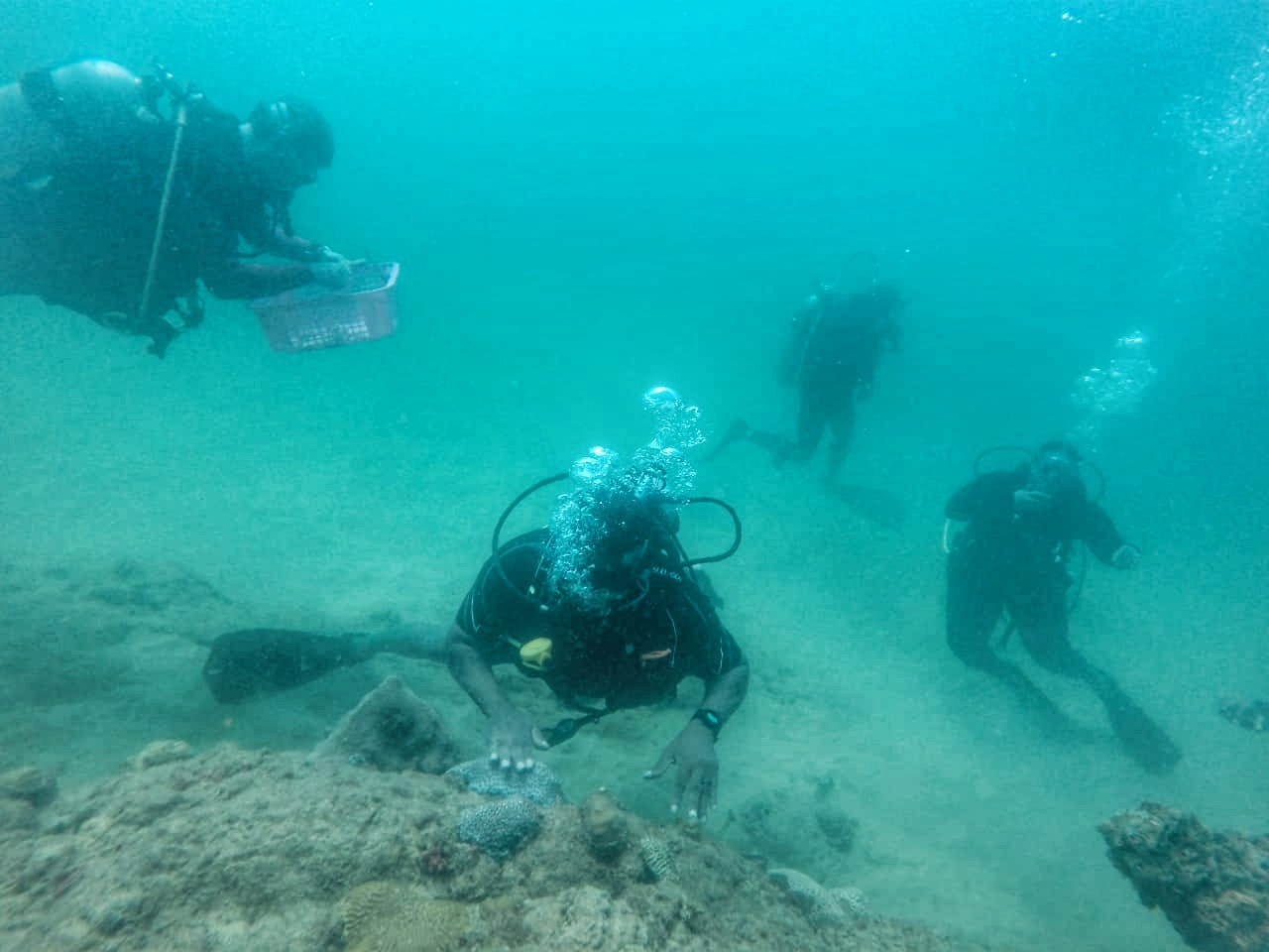 : TTAL CEO Louis Lewis (middle) plants coral on a reef during the conservation exercise.