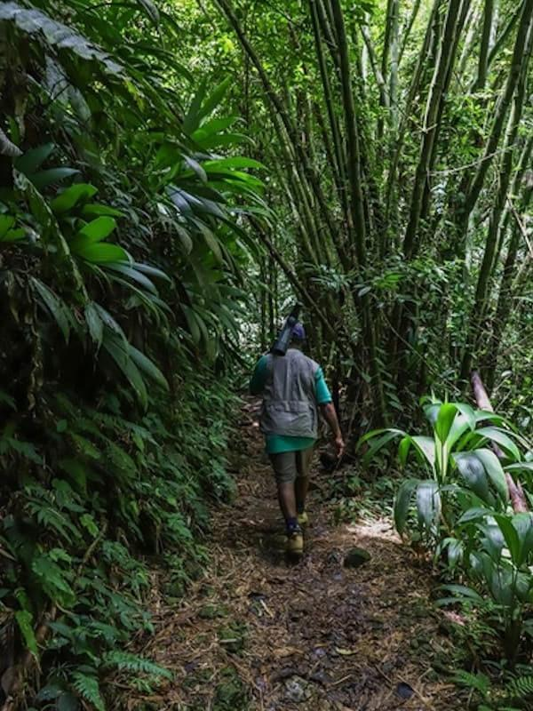 101 reasons Tobago - Main Ridge Forest Reserve Hike