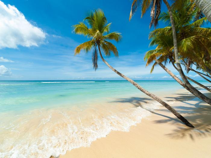 Beach with crashing waves and palm trees stretching over the water