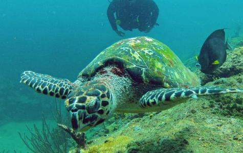 Swim with turtles at Mt Irvine Wall