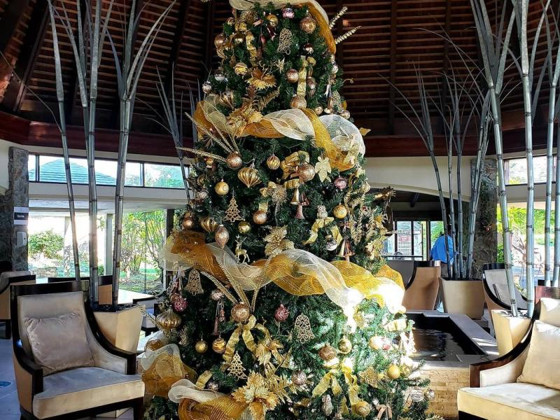 Christmas tree-Mt Irvine Resort
